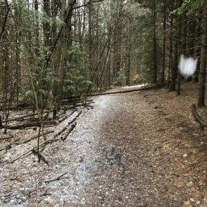 Image: A nice dusting of snow through and early season trail run.